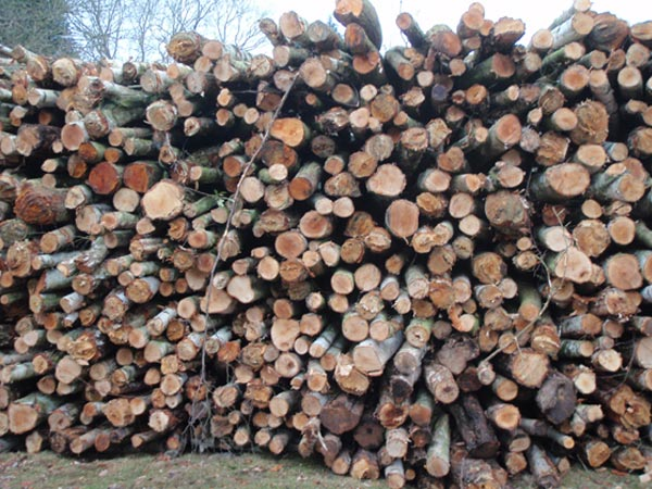 Different Types of Wood for Burning and their Characteristics